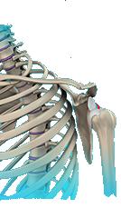 shoulder-instability